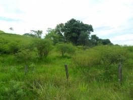 Ótimo lote de terreno, em local de muito verde.